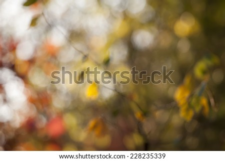 Autumn  background with leaves in season colors - stock photo