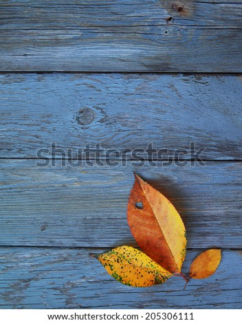 Autumn background with leaves. Yellow leaves on a blue background. - stock photo