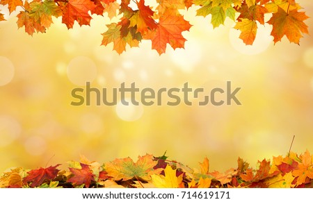 autumn background with maple leaves