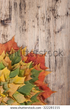 Autumn background with maple leaves on a wooden board.