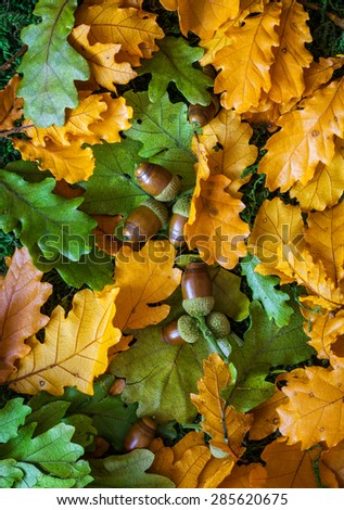 Autumn background with oak leaves and acorns - stock photo