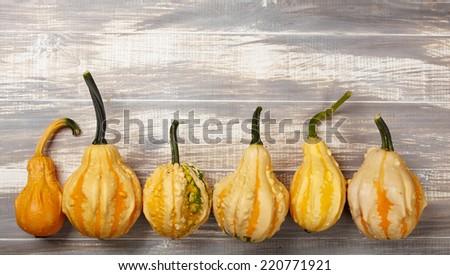 autumn background with pumpkin - stock photo