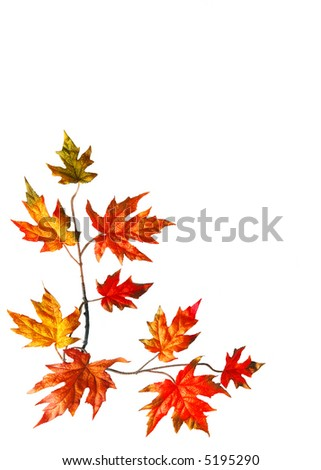 Autumn background with red fall maple leaves