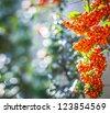 autumn background with sea buckthorn seasonal garden plant - stock photo