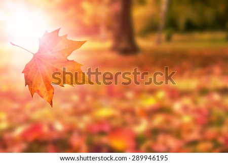 autumn background with single leave