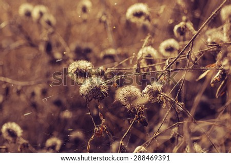 Autumn background with sunny plant, vintage retro image - stock photo