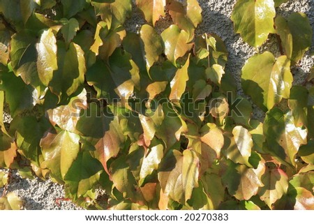 Autumn background with the leaves