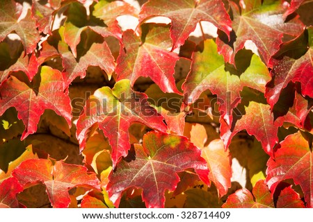 Autumn background with yellow and red leaves for backdrop - stock photo