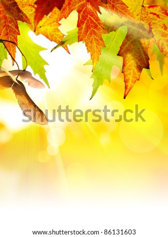 autumn background with yellow leaves of autumn  tree lit by the sun