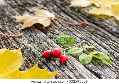 Autumn background: Yellow colored autumn maple leafs on wooden board with red dog-rosa (roa canina) - stock photo