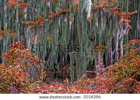 Autumn Bayou - stock photo