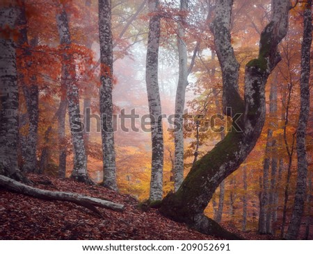 Autumn beautiful forest. - stock photo