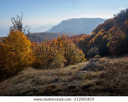 Autumn beautiful forest - stock photo