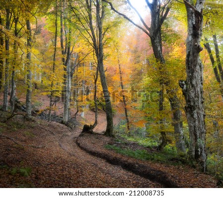 Autumn beautiful forest