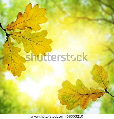 Autumn beauty - stock photo