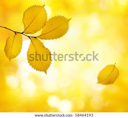 Autumn beauty - stock photo
