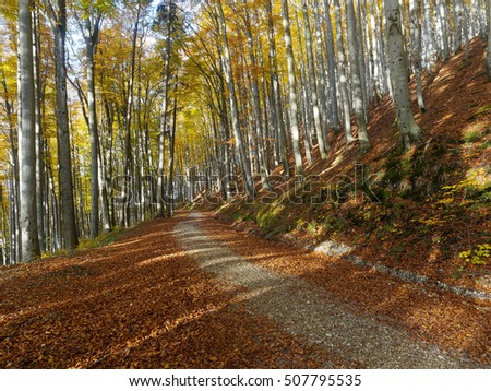 autumn beech forest in austria