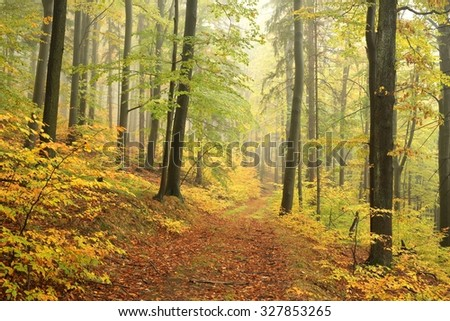 Autumn beech forest in misty weather. - stock photo