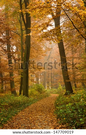 Autumn beech forest with path - stock photo