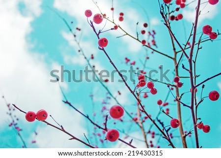 Autumn berries against a blue sky/autumn nature background - stock photo