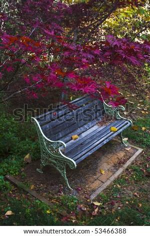 autumn bloody red maple leaves bench under branch in wooden garden - stock photo