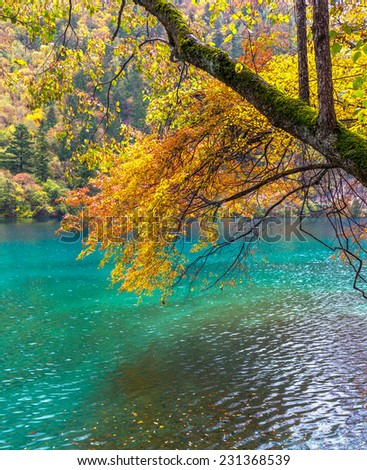 Autumn branch of a birch tree against the blue of the lake. Jiuzhaigou Valley was recognize by UNESCO as a World Heritage Site and a World Biosphere Reserve - China - stock photo