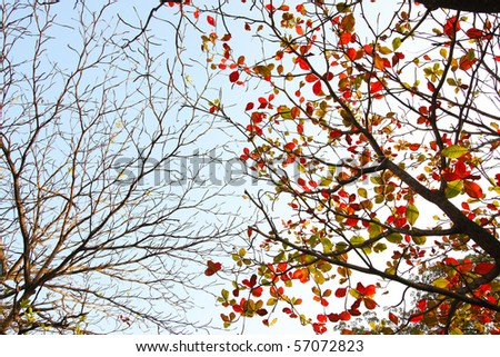 autumn branches and dry branches