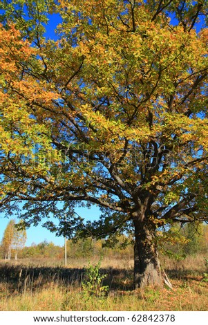 autumn branches of the oak on celestial background - stock photo