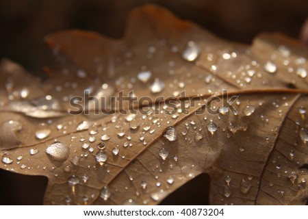 Autumn brown sheet in dew drops - stock photo