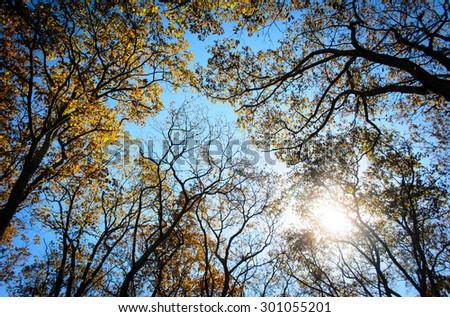 Autumn Canopy at Shenandoah National Park - stock photo