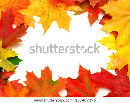 Autumn card of maple leaves