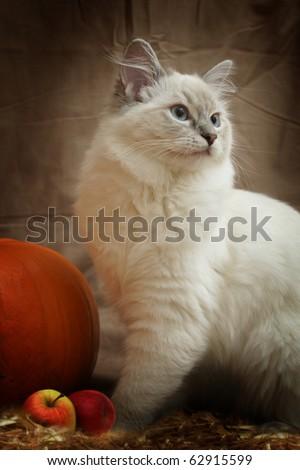 Autumn cat portrait - stock photo
