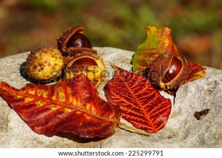Autumn chestnuts - stock photo