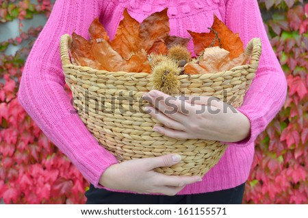 Autumn chestnuts and leaves in the basket - stock photo