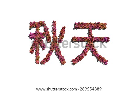 Autumn chinese text flower with white background concept of typography - stock photo