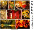autumn collage from forest nature details  - stock photo