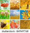 Autumn collage showing different autumn pictures - stock photo