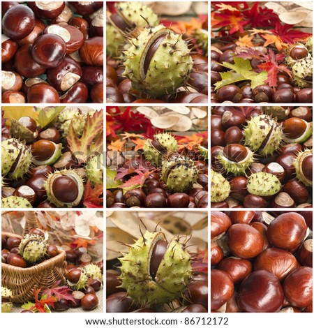 Autumn collage with different pictures - stock photo
