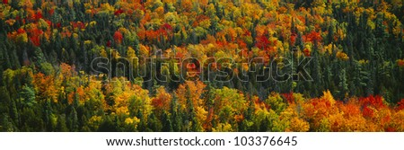 Autumn color at Porcupine State Park, Michigan's Upper Peninsula, Michigan - stock photo