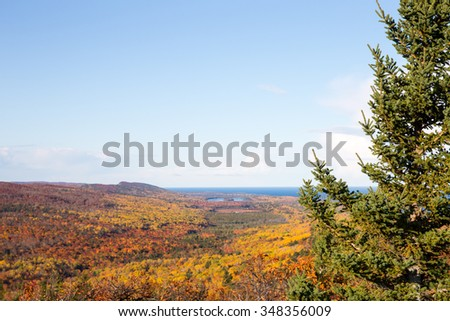 Autumn Color Background - Nature background with trees in autumn colors and a clear blue sky framed by a green pine tree along the right edge of frame. Focus on foreground tree. Copy space in the sky.