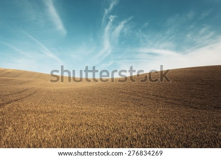 Autumn color grass and blue sky background - stock photo
