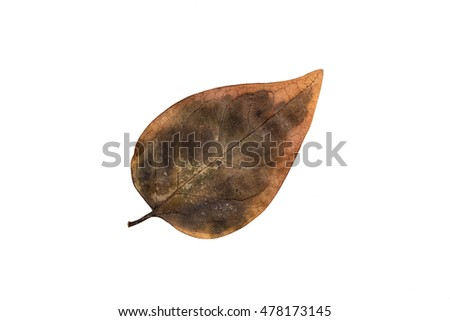 Autumn Color Leaf. Isolated on White Background.