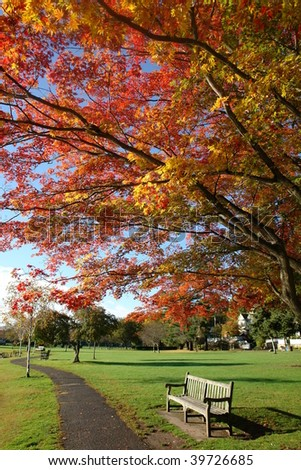 Autumn color tree and bench in the park, Greenwich, Connecticut - stock photo