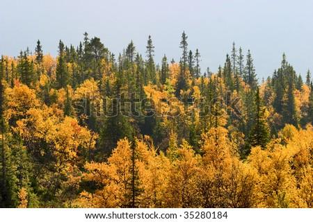 Autumn colored forest landscape - stock photo
