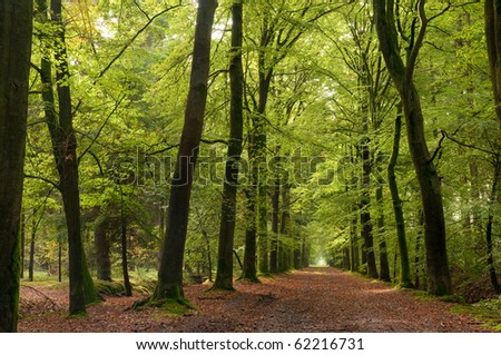autumn colored forrest pathway - stock photo