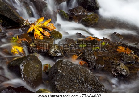 Autumn colored leaves in the middle of a stream in the Columbia Gorge area of Oregon - stock photo