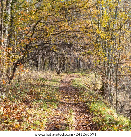 autumn colored tourism trail in the woods in the countryside - square image - stock photo