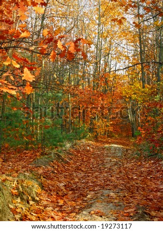 Autumn colorful field among trees - stock photo