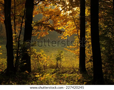 Autumn colorful forest