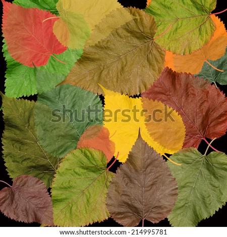 Autumn colorful leaves black background - stock photo